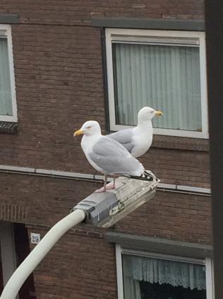 http://constantijnscholten.nl/files/gimgs/th-54_IMG_6892.jpg