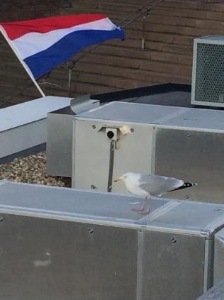 http://constantijnscholten.nl/files/gimgs/th-19_IMG_5379.jpg